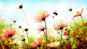 bloemetjes bijtjes